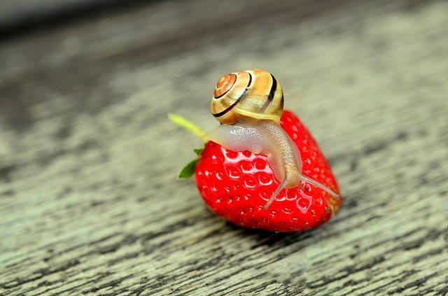 caracol en fresa